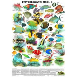 Schéma - Ryby korálových moří - II