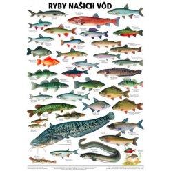 Schéma - Ryby našich vod