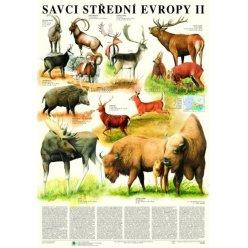 Schéma - Savci střední Evropy II - Sudokopytníci