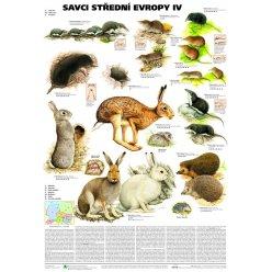 Schéma - Savci střední Evropy IV