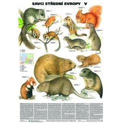 Schéma - Savci střední Evropy V