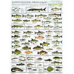 Schéma - Sladkovodní ryby střední Evropy