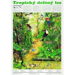Schéma - Tropický deštný les