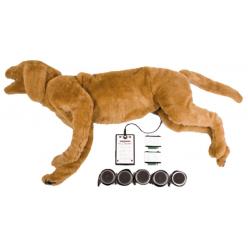 Goldie - psí simulátor dýchacích a srdečních ozev