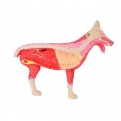 Rozkládací model psa