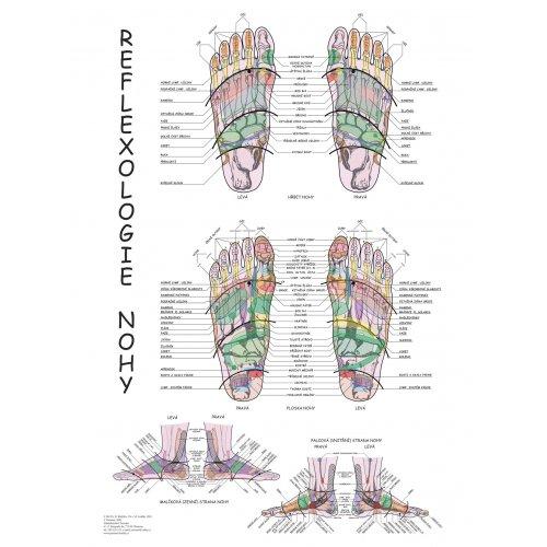 Schéma - Reflexologie nohy