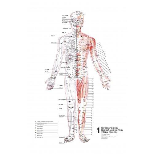 Schéma - Topografie akupunkturních bodů 1. 2. 3