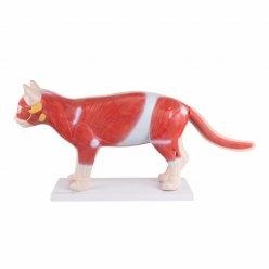 Rozkládací model kočky