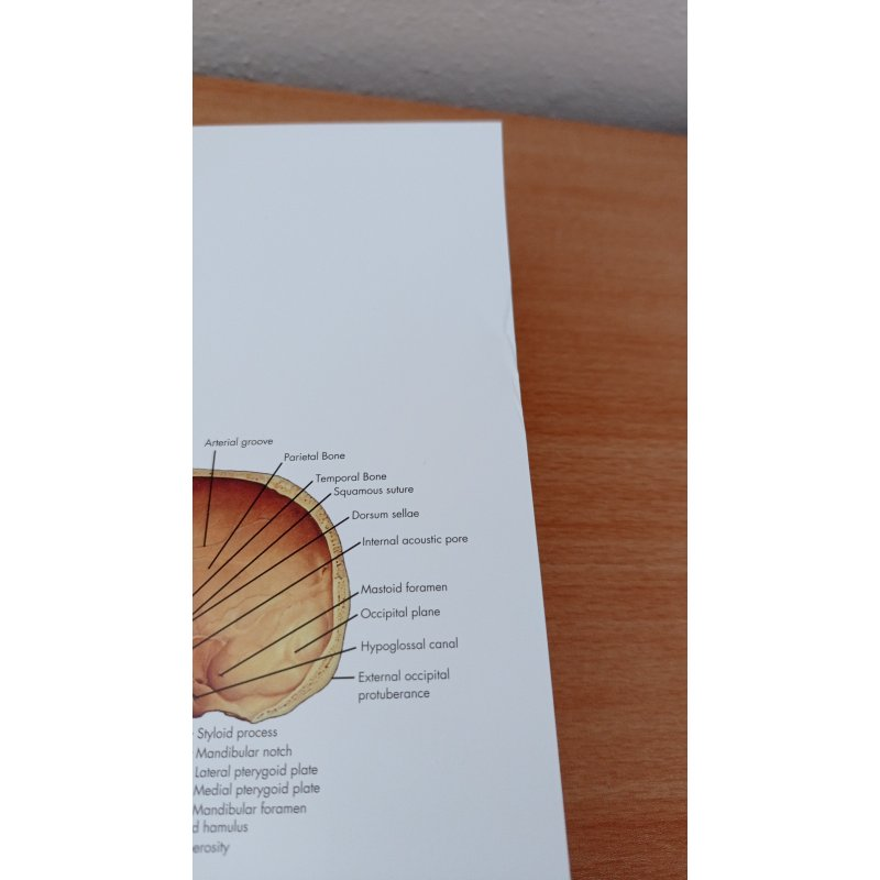 Schéma - lidská kostra - AJ - 50x67 cm