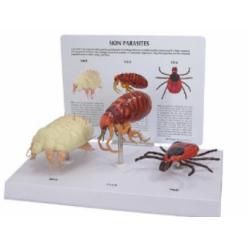 Psí parazitní model