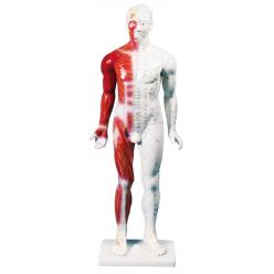 Čínská figurína muže pro akupunkturu, 80 cm