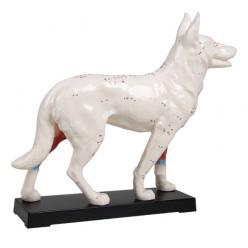 Model psa s akupunkturními body