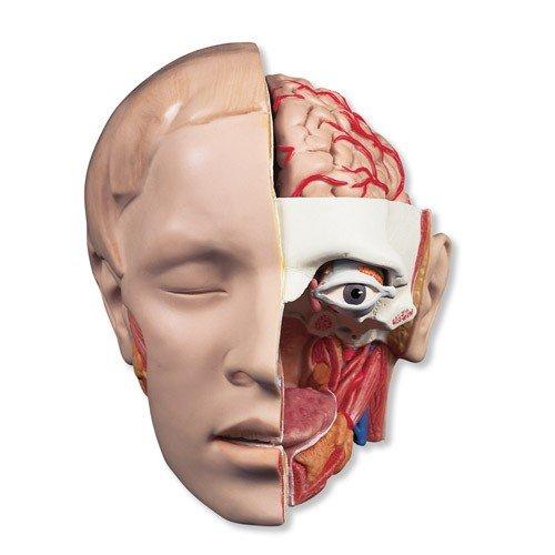 Model lidské hlavy - 6 částí