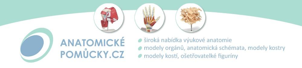 Anatomické-pomůcky.cz